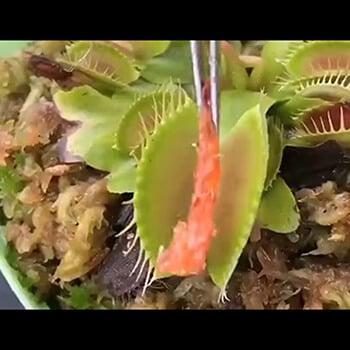 【エロ画像】 オチ○ポ様にご奉仕しちゃってるヒロイン達の二次エロ画像wwwpart89